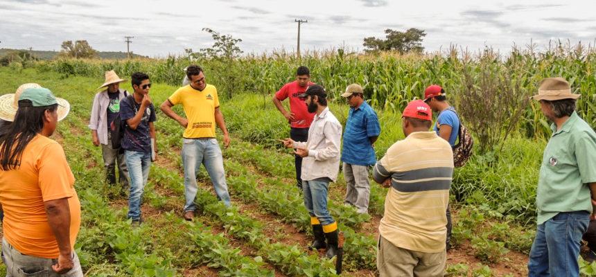 Indígenas realizam intercâmbio com o Assentamento do MST, Luiz Beltrame, em Gália