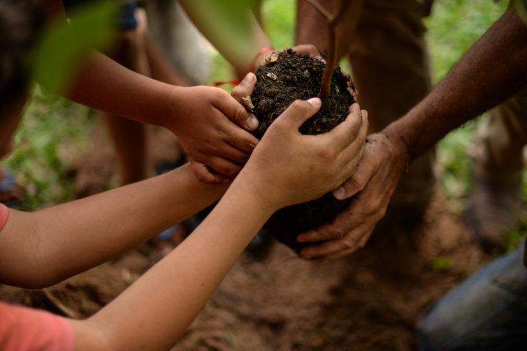Plantar árvores MST