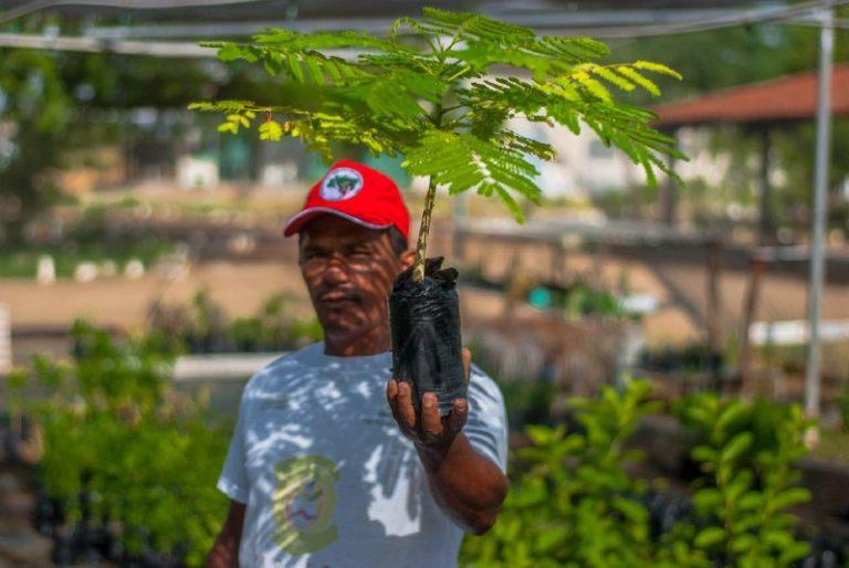 Plantar árvores, produzir alimentos saudáveis MST