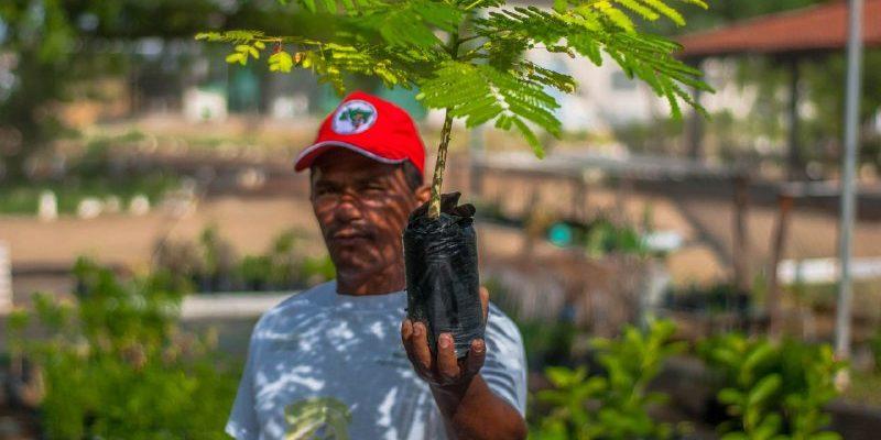 Em Brumadinho, MST lança Plano para plantar 100 milhões de árvores