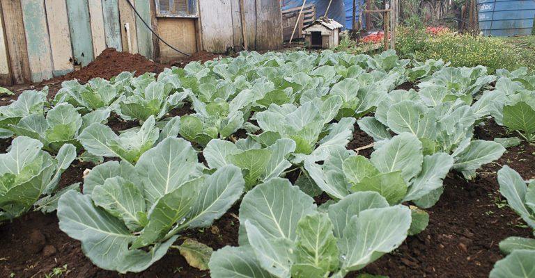 Perseguição de Moro a agricultores termina com todos absolvidos