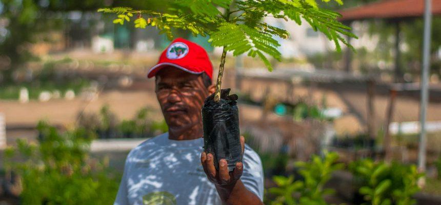 Produzir alimentos saudáveis e plantar árvores: a Reforma Agrária Popular no combate ao Coronavírus