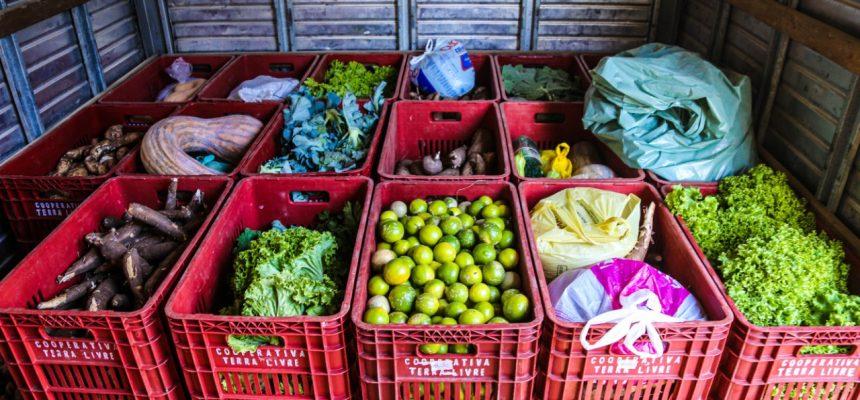 Solidariedade que brota da terra: MST do Paraná doa 45 toneladas de alimentos