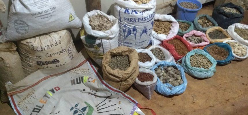 Você conhece as técnicas para realizar coleta de sementes?