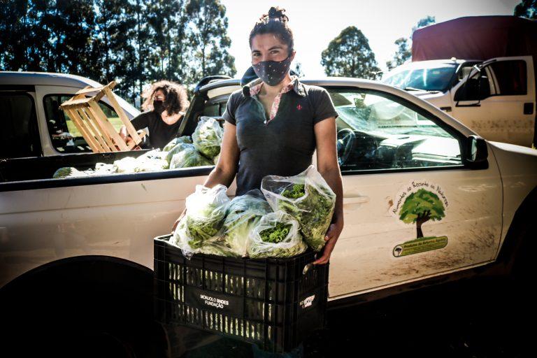 MST Paraná Doação alimentos agroecológicos
