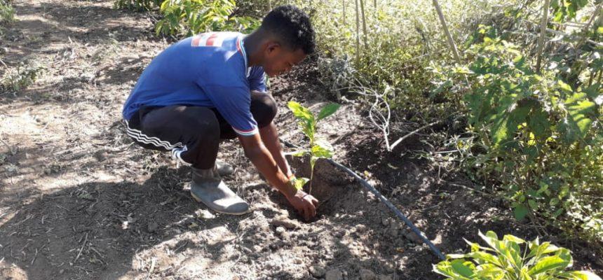 """""""Continuaremos a plantar árvores e lutar pela vida"""""""