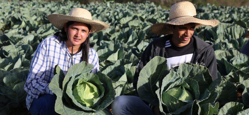 Luta e resistência: conheça camponeses que doam 50 toneladas de alimentos no PR