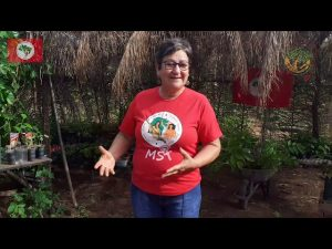 Produção de Mudas | Plantar Árvores, Produzir Alimentos Saudáveis