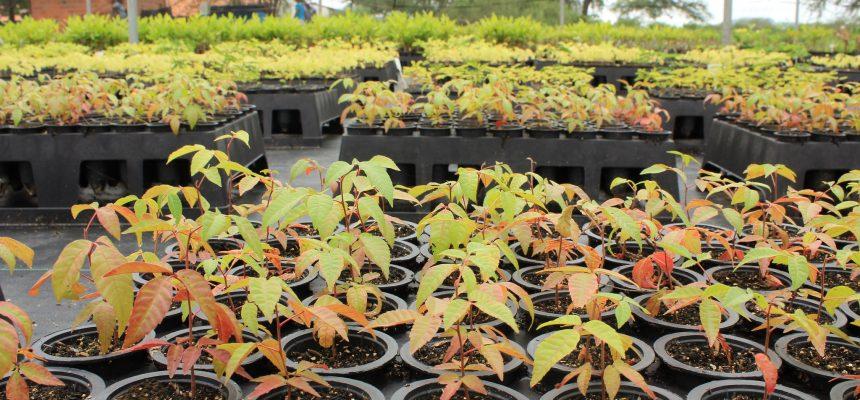 Viveiro de mudas em área da Reforma Agrária é referência no Sertão de Alagoas