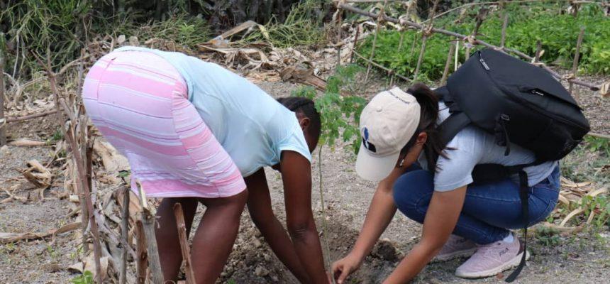 A luta dos movimentos sociais haitianos em busca da soberania alimentar