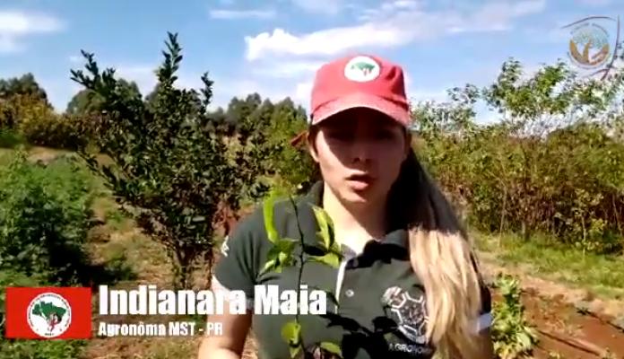 Plantio de Muda Frutífera: confira a experiência de assentamentos no sul