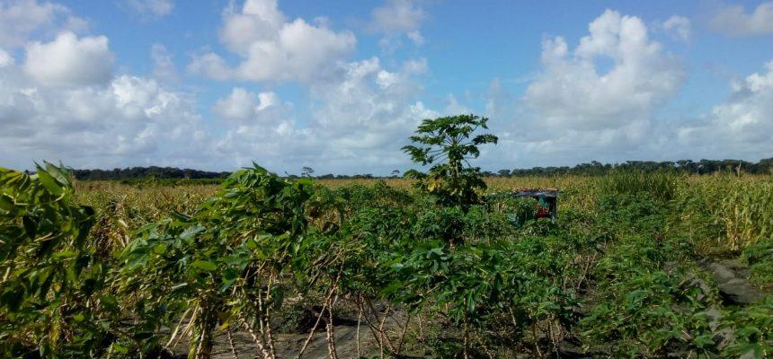 Ameaçadas de despejo, famílias acampadas fazem doação de alimentos em Alagoas