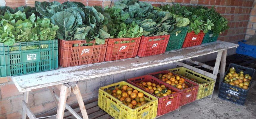 Assentados da Reforma Agrária doam 34 cestas de alimentos em Tapes (RS)