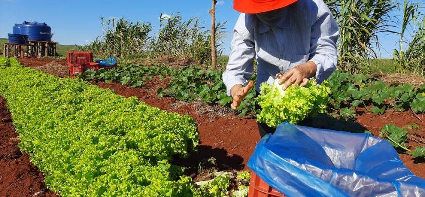 Em carta aberta, movimentos populares pedem apoio à votação do PL da agricultura
