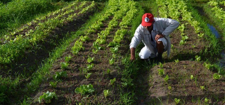 PL 886 apresenta medidas urgentes para produção de alimentos em meio à pandemia