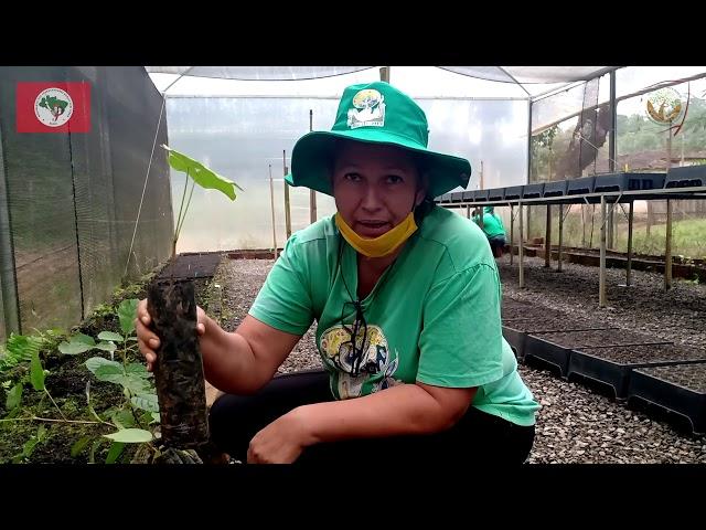 Viveiros Coletivos | Plantar Árvores, Produzir Alimentos Saudáveis