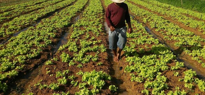 Senado aprova por unanimidade Lei Emergencial da Agricultura Familiar