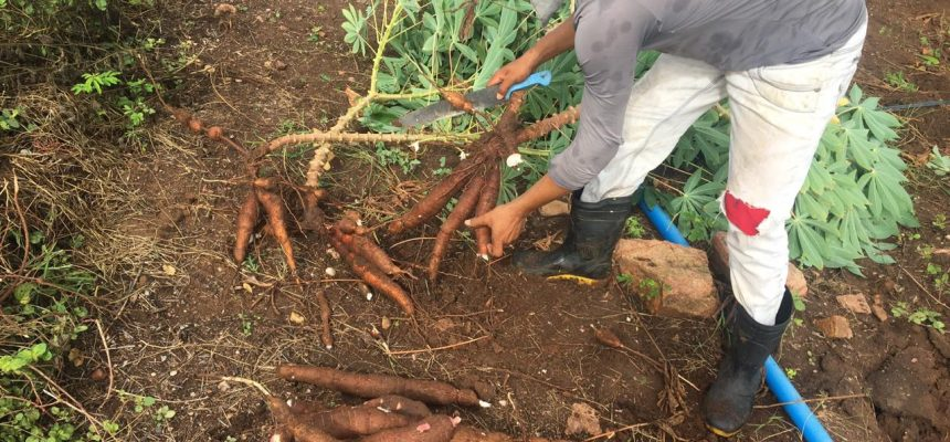 Adiada votação do PL Emergencial da Agricultura Familiar