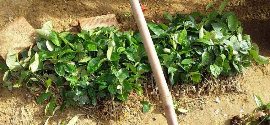Artigo | Terra e trabalho no Plano Emergencial de Reforma Agrária Popular