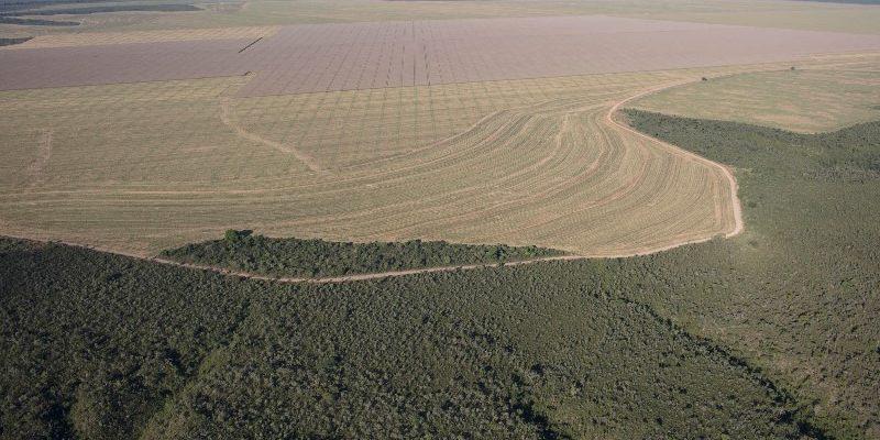 Agrotóxicos e cerrado: da degradação da fauna silvestre à impactos na vida humana