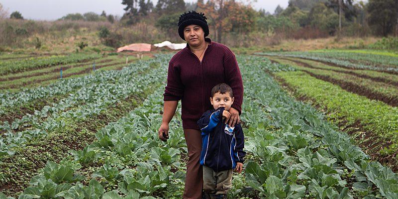 """""""Somos prova de que é possível"""": MST é referência em agroecologia"""