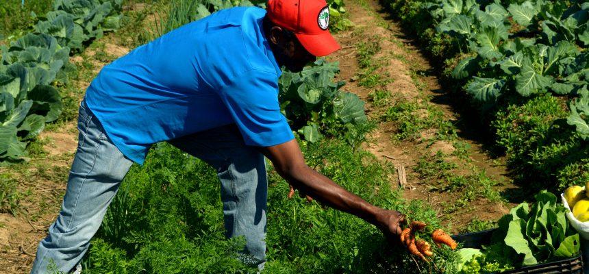 Comemorar o Dia da Agricultura Familiar é celebrar a produção de alimentos saudáveis
