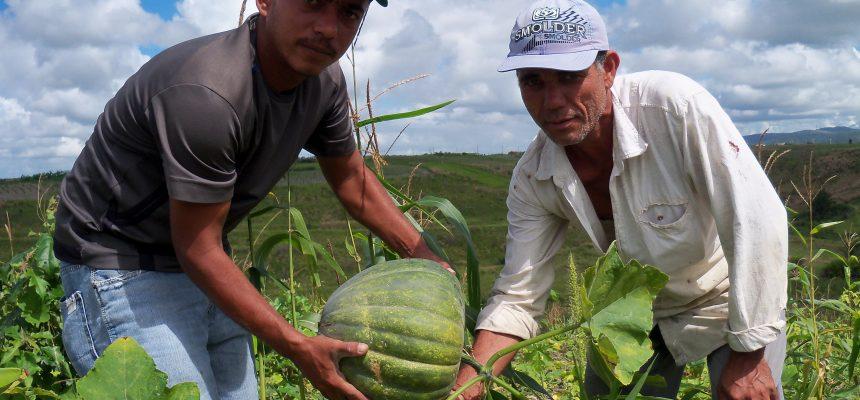 Movimentos pautam medidas emergenciais para a produção de alimentos em Alagoas