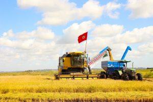 Cooperativismo potencializa a produção de alimentos saudáveis em todo país
