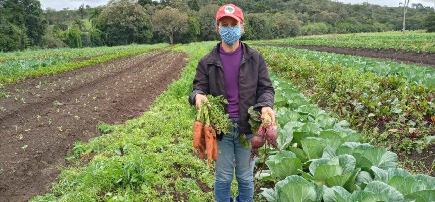 Após aprovação, PL da Agricultura Familiar segue para votação no Senado