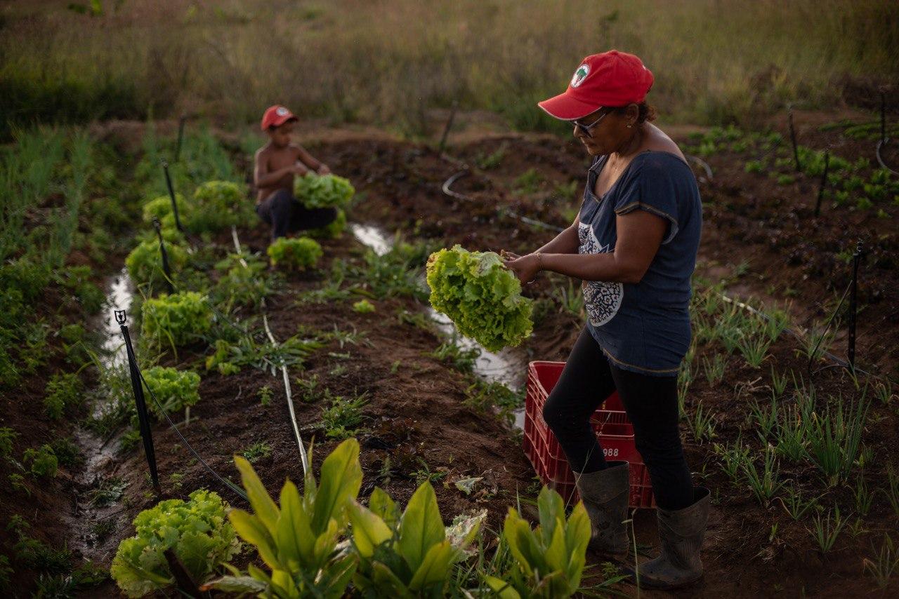 Conheça as Hortas Agroecológicas Solidárias que fortalecem comunidades contra a fome