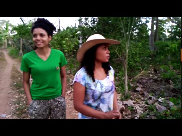 Árvores e Hortas | Plantar Árvores, Produzir Alimentos Saudáveis