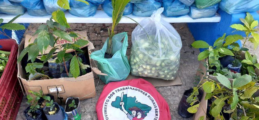 Conheça algumas ações da Campanha de Plantio de Árvores do MST no Maranhão