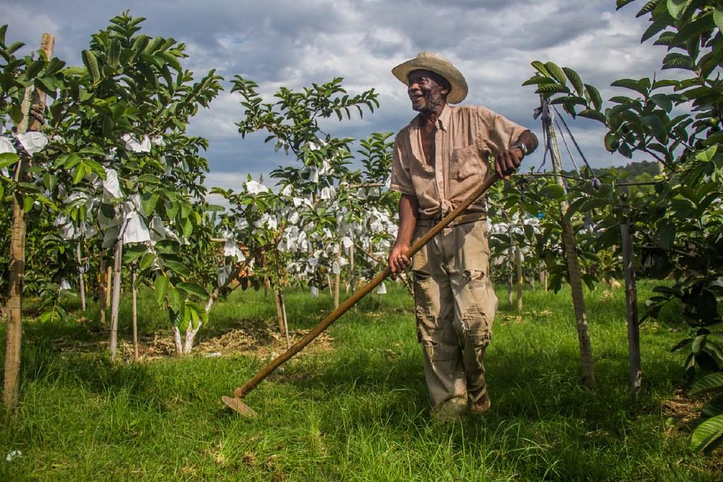 Produção e educação no Quilombo Campo Grande (MG)
