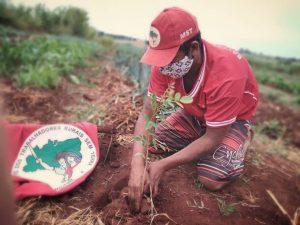 MST realiza plantio de árvores em todo o país