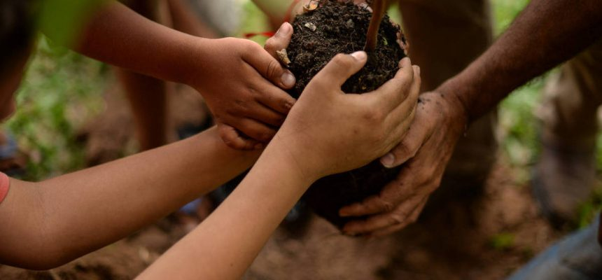 MST holds national tree planting campaign throughout Brazil