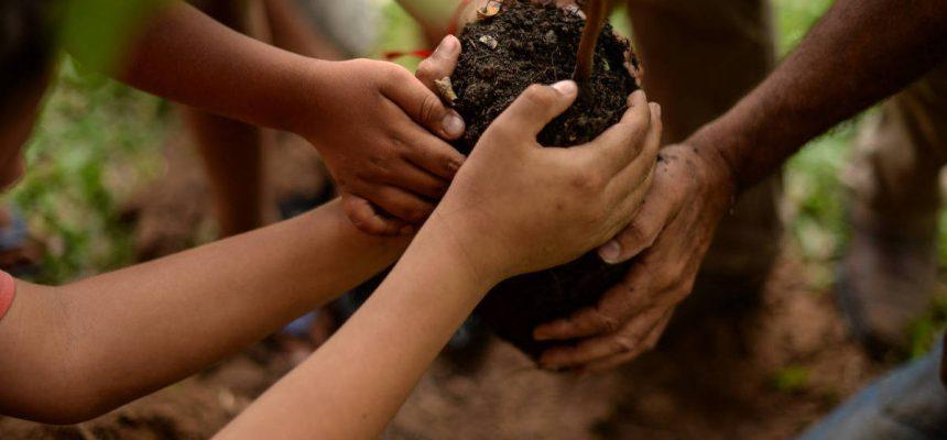 MST realiza jornada nacional de plantio de árvores em todo o Brasil