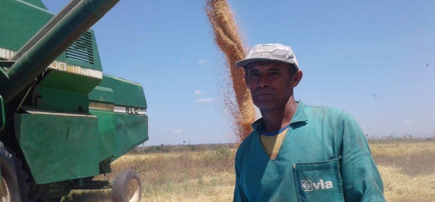 MST inicia colheita de arroz no Piauí