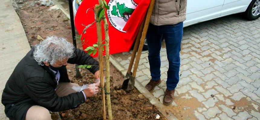 MST planta árvores em homenagem aos mais de 3700 mortos de Coronavírus no RS