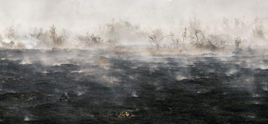 Pantanal vive pior crise de queimadas dos últimos anos