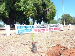 No Centro-Oeste, resposta para queimadas e desmatamento é plantio de árvores