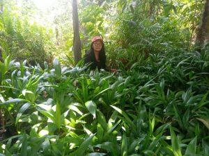 Mulheres organizam viveiros e SAFs na Campanha de Plantio de Árvores do MST