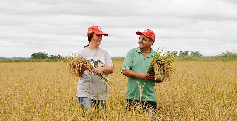 Em meio à alta de preços, arroz orgânico do MST segue a preço justo