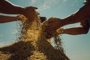 Qual o impacto do imperialismo nos preços dos alimentos e na agricultura camponesa e familiar?