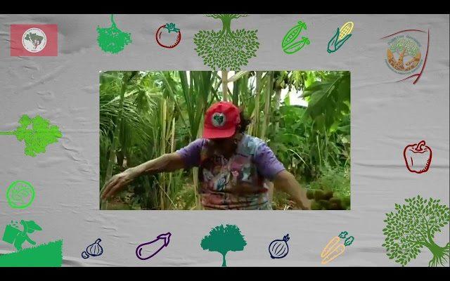 Árvores e Saúde | Plantar Árvores, Produzir Alimentos Saudáveis