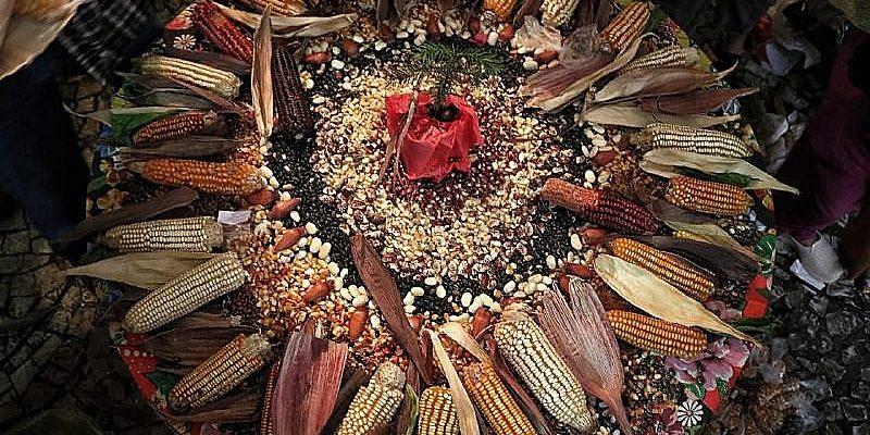 Autonomia e diversidade na produção de alimentos saudáveis
