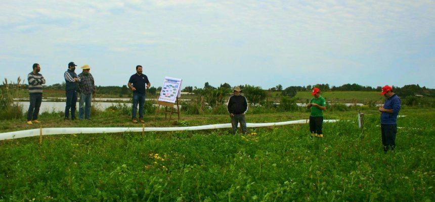 MST RS inicia pesquisa para melhorar produção de arroz agroecológico