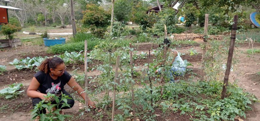 IALA retoma atividades durante pandemia e aponta alternativas agroecológicas