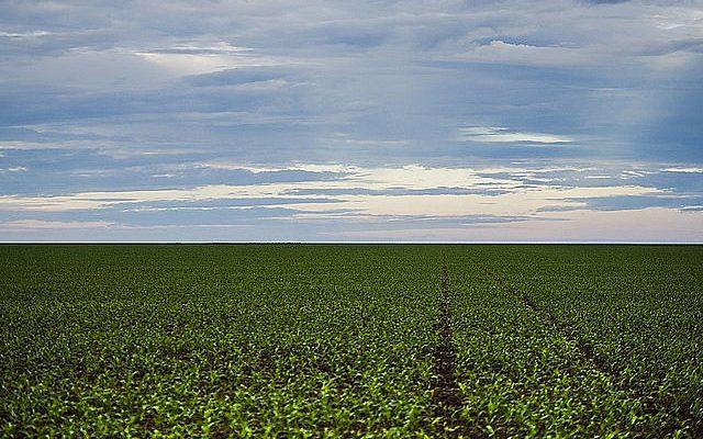 Senado aprova PL que facilita compra de terras por estrangeiros; entenda os riscos