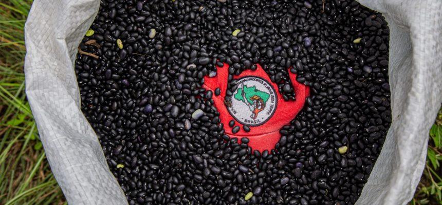 Lavoura coletiva do MST gera 4 mil quilos de feijão orgânico para marmitas solidárias e doações no PR