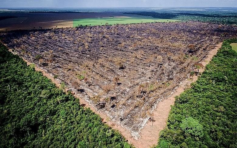 Coca-cola adota Unidade de Conservação no Amazonas